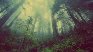 שני חמישיות מהצמחים בכדור הארץ בסכנת הכחדה
